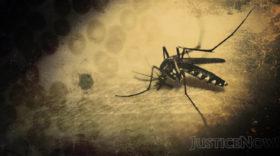 Ministerium erklärt Gesundheitsnotstand – Malaria und Denguefieber auf dem Vormarsch im Jemen